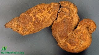 Paleovýkaly: co se můžeme dozvědět ze zkamenělých výkalů