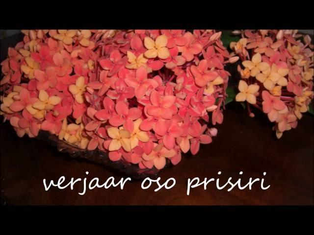 Sabakoe Live - Verjaar Oso Prisiri
