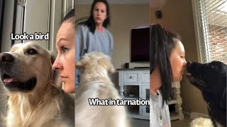 Annoying My Dogs By Doing Things To Them That They Do To Me (Part 2)