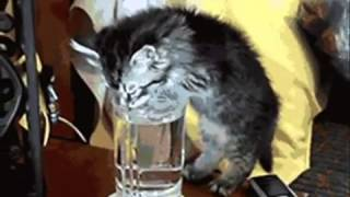Выйду ночью в кухню с котом..!!!! - кошки отжигают на кухне)