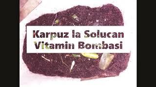Gambar cover KIZIL ELMA SOLUCAN GÜBRESI Milliproje