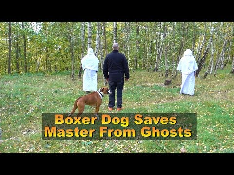 boxer-dog-rex-saves-master-from-ghosts-😁
