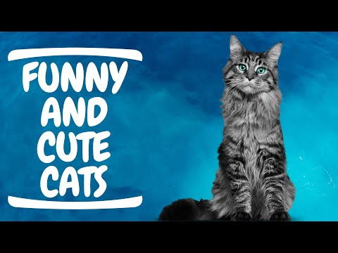 Baby Cats - Funny and Cute Cat Videos Compilation #16