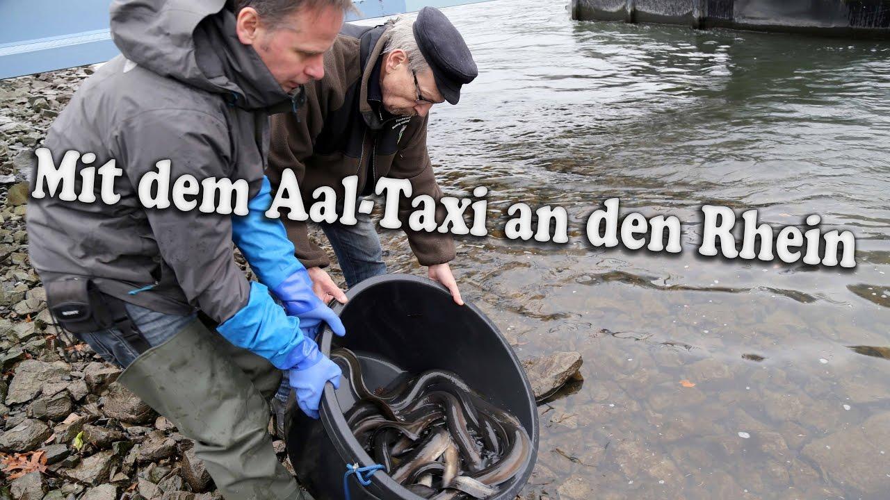 Why Abkürzung