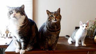 雑草に夢中なねこ2。-Cats crazy about weeds 2.-
