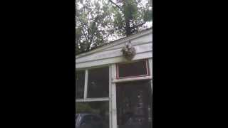 New Jersey Stinkbug, Bed Bug, Hornet Control | 732-309-4209 Pest Control New Jersey