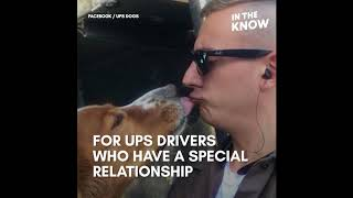 UPS drivers love your dogs