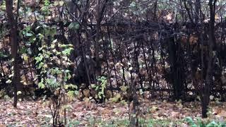 Медведь в Чебоксарах все еще не может уснуть, несмотря на снотворное