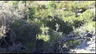 fermeture de la chasse au niolu 2014 nzl