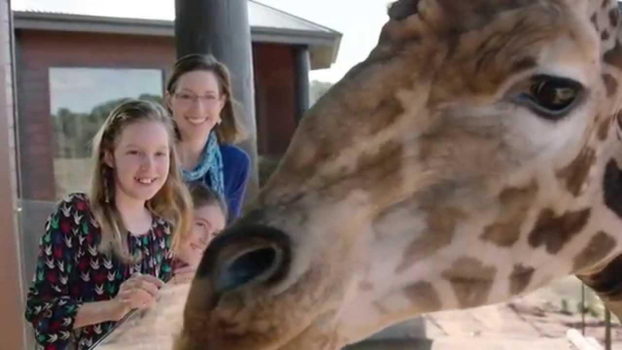 Отель зоопарк в Австралии Jamala Wildlife Lodge