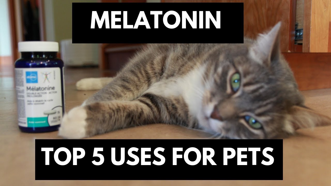 Melatonin Top 5 Uses For Dogs And Cats Youtube