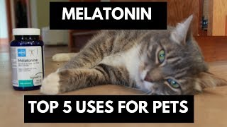 Melatonin: Top 5 Uses For Dogs and Cats