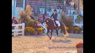 Stibby Me - German Riding Pony