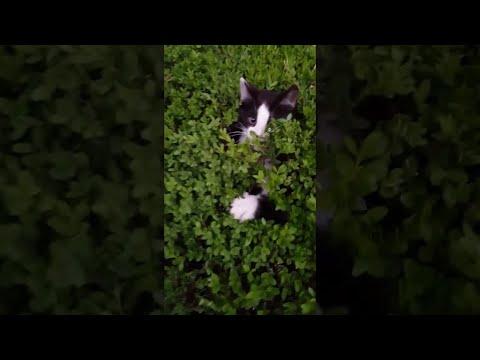 Peek-a-Boo Bush of Kittens    ViralHog