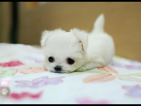 Cutest Puppies In The World You Must Watch This Youtube