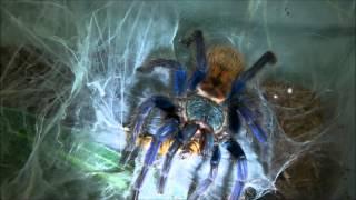 Tarantula Feeding Video 31 (Happy Halloween!)