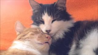 Искусство сна. Как глубоко и сладко спят коты :) The Art of Sleep. Deepest dreams.