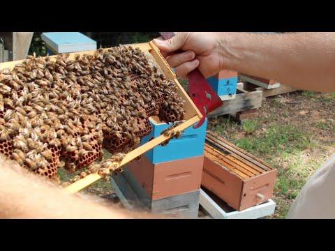 Summer Dearth Hive Inspecting « Keeping Backyard Bees