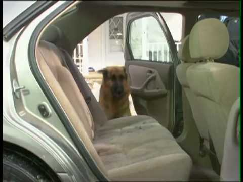 Pet Rider, Waterproof Seat Cover, As Seen On TV Hawaii, Official Video