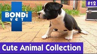 🐶 CUTE ANIMAL COLLECTION #12 | BONDI VET 🐘