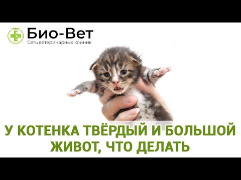 Вопрос: Как стимулировать испражнение у новорожденного котенка?
