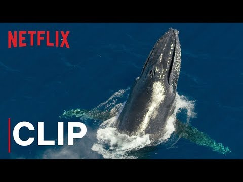 Netflix's Our Planet Shows How One of the World's Biggest Animals Lives Off a Tiny Food Source