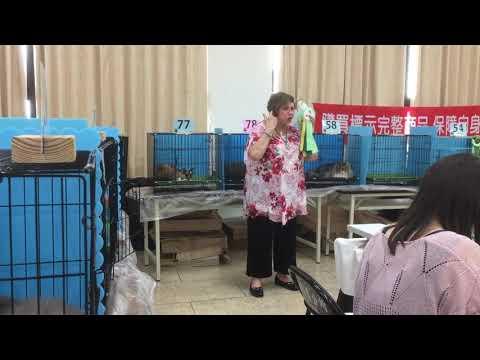 CFA cat show(2018.06.03) Devon Rex cat
