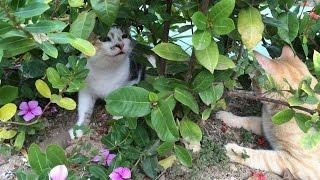 Смешные и игривые коты