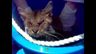 Lime Dip Treatment: Cat Rescued With Sarcoptic Mange