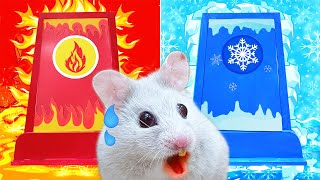 HOT and COLD Challenge: Pet Hamster Maze Obstacle Traps Lava and Icy - CARTOON Life Of Pets Hamham