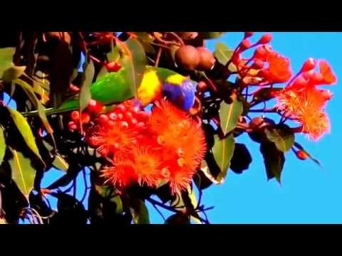 30 minutes daily Zen Relaxation Meditation Music &  Nature Video - Realexcel Sanctuary