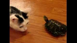 Черепаха vs кот (dangerous turtle)