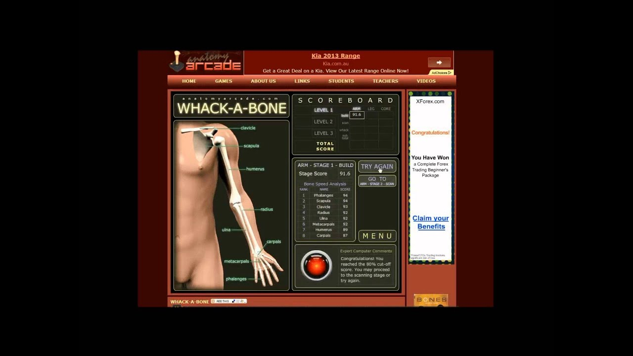 Educ 1751 Final Hd Anatomy Arcade Youtube