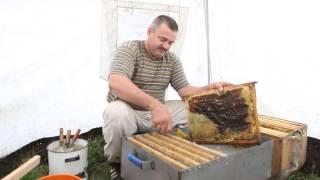 Пчеловодство. Сергей Толстов советы для начинающих пчеловодов. Качка меда.