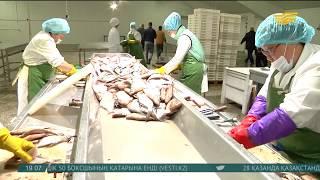 Мыңарал зауыты балық өнімдерін шетелге экспорттай бастады