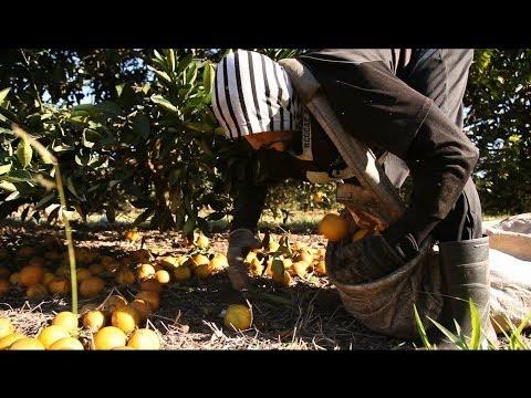 Der Weg des Orangensaftes, De l'orange au jus