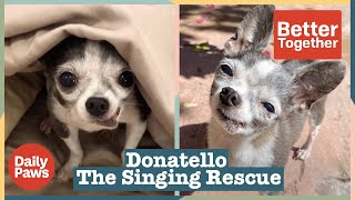Ever Met a Singing Chihuahua? Meet Donatello The Singing Rescue Dog    Better Together   Daily Paws
