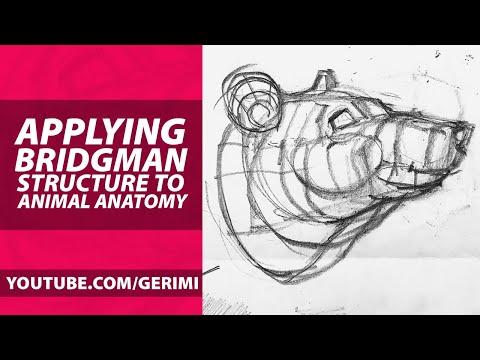 applying-bridgman-structure-to-animal-anatomy