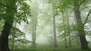 古箏-深山禪林