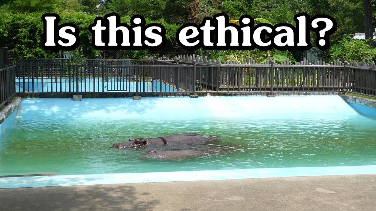 are zoos ethical Animals in zoos is it morally wrong to keep animals in zoos the animal rights answer it is wrong if animals have rights because: it treats the animal as a means to achieve some human end.