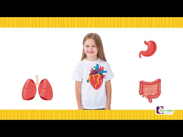 İç Organlarımızı Tanıyalım - İç organlarımız ne işe yarar? - Okul Öncesi Eğitim