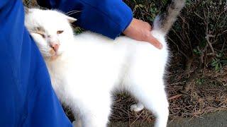 野良猫がゴロゴロ喉を鳴らしながらすり寄ってきてカワイイ