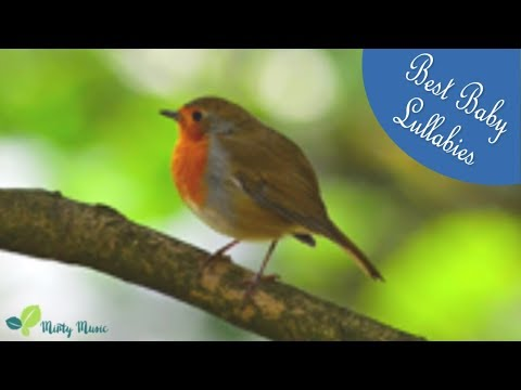 Baby Music -Relaxing Music For Babies Adults MusicTo Relax Go To Sleep and Relax Babies & Adults