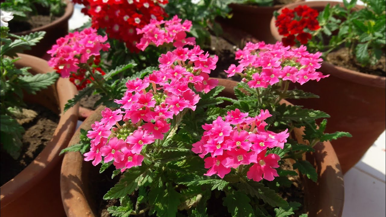 Some Winter Flowering Plants With Names Youtube