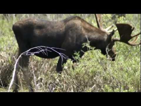 """Yellowstone - The American Serengeti  - """"Home"""""""