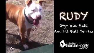 Rudy - Available For Adoption!!