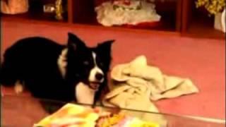 Petzoom - Sonic Pet Trainer - Home