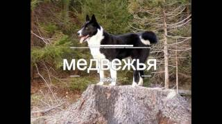 Лайка: Все виды лаек