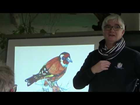 les #oiseaux de jardins par Serge kERGOAT