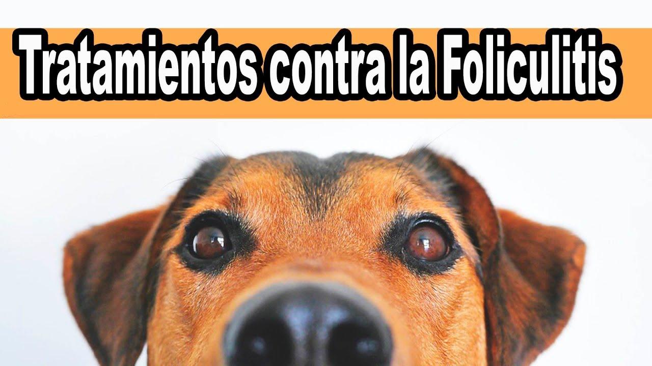 foliculitis en perros tratamiento casero
